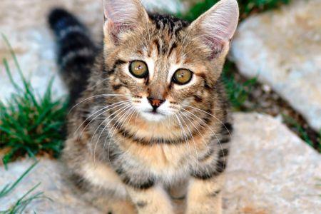 Animali ammessi: cani e gatti sono i benvenuti